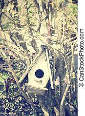 casa, pájaro