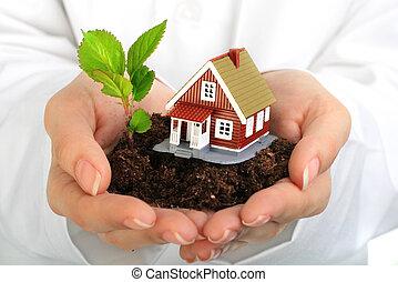 casa pequeña, planta, hands.
