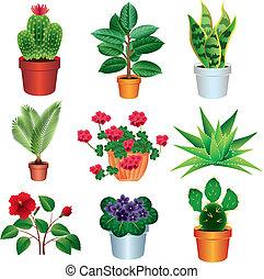 casa, piante, vettore, set