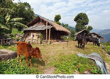 casa, valle, khumbu, nepal, bello
