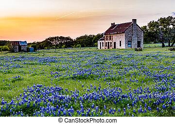 casa, wildflowers., viejo, tejas, abandonded