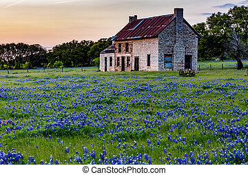 casa, wildflowers., viejo, tejas