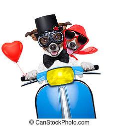 casado, apenas, cachorros