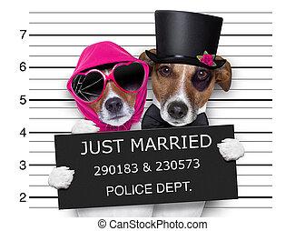 casado, sólo, mugshot, perros