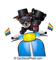 casamento, cão, homossexual