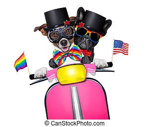 casamento, cachorros, homossexual