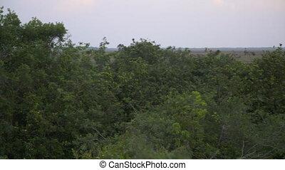 Casanare Wetland Nature Plains, Wisirare, Colombia - Wide...