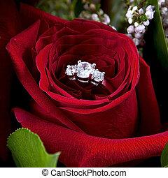 casar, rosa, usted, voluntad, alianza, me?