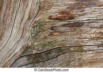 casca de árvore, textured, experiência., natureza, detail.