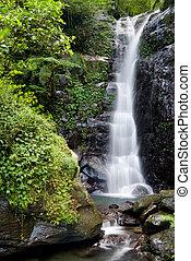 cascada, bosque