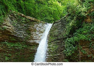 cascada, bosque verde