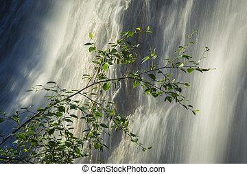cascada, rama de árbol, abedul