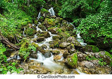 cascada, verde, bosque