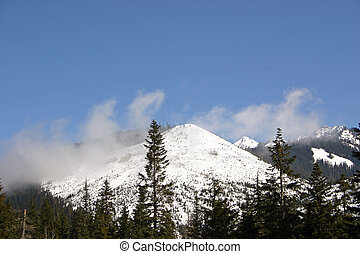 Cascade Mountains snowcapped with pine trees in forefront