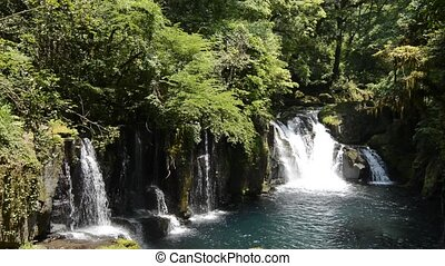 Cascade under primeval forest - Cascade falling from the...