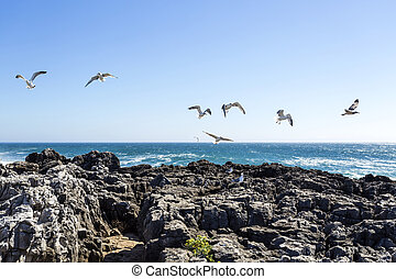 Cascais Rugged Coastline and Seagulls