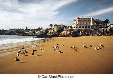 Cascais Seagulls