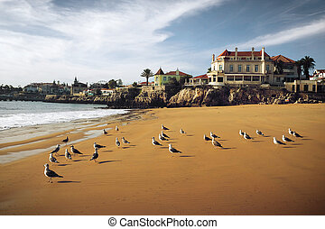 Cascais Seagulls - Seagulls in the beach of the beautiful...