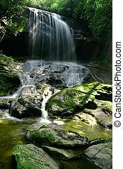 cascata, in, lussureggiante, foresta pioggia