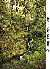 cascata, in, wicklow, montagne, nazionale, park.