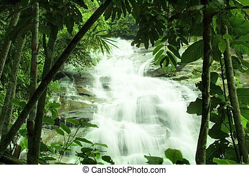 cascate, in, foresta verde