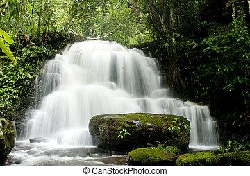 cascate, in, profondo, foresta