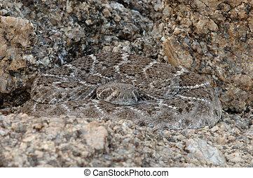 cascavel ocidental diamondback
