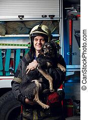casco, bombero, fuego, foto, perro, camión, plano de fondo, ...