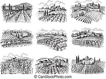 case, fattoria, agricolo, illustrazioni, disegnato, paesaggio., campi, mano, uva, vettore, vigneto