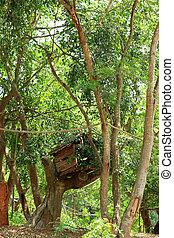 Case, verde, albero, foresta