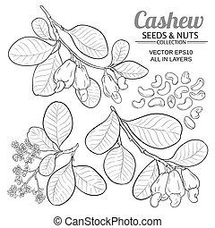 cashew vector set on white background