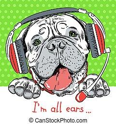 casque à écouteurs, bullmastiff, vecteur, chien, téléphone