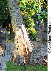 cassé, après, arbre, route, orage
