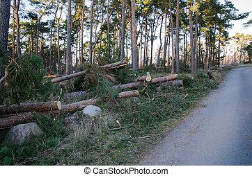 cassé, après, arbres, orage