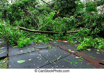 cassé, après, typhon, arbre