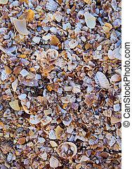 cassé, morceaux, plage, coquilles
