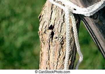 cassé net, tronc arbre