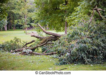 cassé, ouragan, après, arbre, abîmer, storm., orage, baissé
