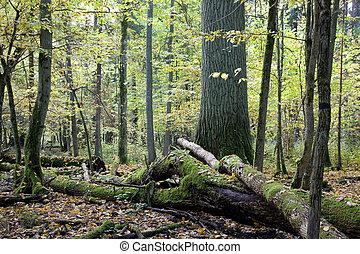 cassé, presque, décliné, arbres