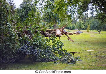 cassé, puissant, après, ouragan, arbres, storm., forêt