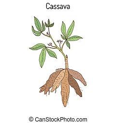 Cassava Manihot esculenta , or Brazilian arrowroot, manioc, tapioca, plant with leaves and tubers