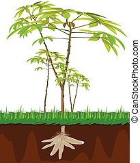cassava plant on white background vector design