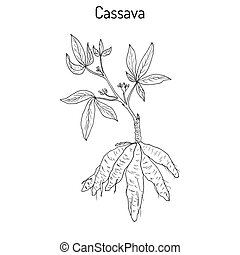 cassava plant with leaves and tubers