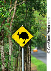 Cassowary warning sign on a road in the tropical north of Queensland, Australia. Cassowary is endangered flightless bird species needs nature conservation.