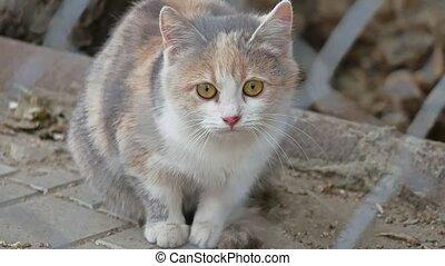 cast a sad kitten with beautiful eyes pet - cast sad kitten...