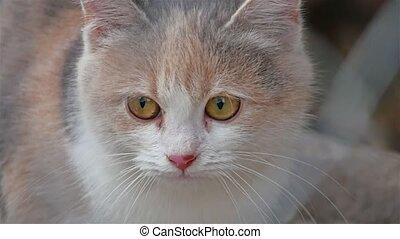 cast a sad kitten with beautiful pet eyes - cast sad kitten...
