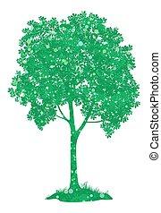 castaña, árbol., vector
