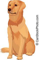 casta, -, perro, perro cobrador, labrador