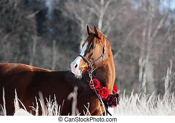 castanha, árabe, cavalo, inverno, retrato