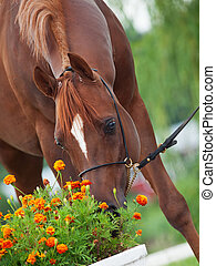 castanha, bonito, fungar, cima, árabe, flowers., fim